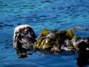 kelp6