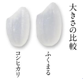 fukumaru2